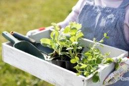 3 kõige olulisemat nõuannet maikuu aiatöödeks