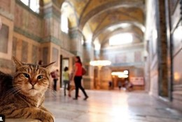 Kas oled kohanud selles kuulsas vaatamisväärsuses pesitsevat poseerija-kassi?