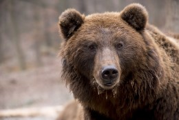 Karu sülg aitab antibiootikume uurida
