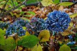 SÜGIS AIAS   Viimased aiatööd enne talvepuhkust ootavad sind õue!