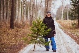 VIDEO   Jõulupuu koju ehk Kuidas RMK mobiilirakenduse abil metsast kuuske tuua?
