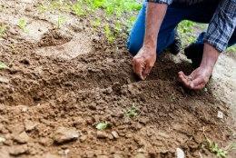 Heitlik aprill aias: hakka kompostima, korista kasvuhoone ja säti terrass valmis