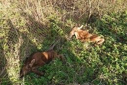 FOTO | Loomakaitse liit tunneb muret: Kevadtormi tõttu hülgavad loomad oma pojad ning panevad vastsündinud surmaohtu