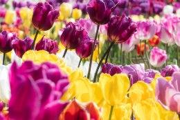 AED | Nende soovituste abil säilivad lillesibulad terved ja näriliste eest kaitstud
