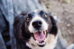 Väldi tõsisemaid tervisemuresid: 10 põhjust, miks lemmiklooma suuhügieen on tähtis
