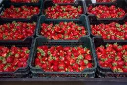 Maasikatootja: kõik teavad, et marju turgudel segatakse