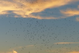 Putukatest priiks! Mille järgi valida putukatõrjevahendit?