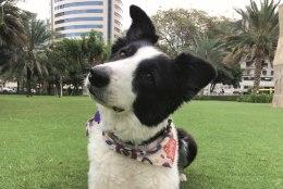 Maailmarändurist koera Mate seiklused: 20 tunniga transpordipuuris Hiinast Eestisse