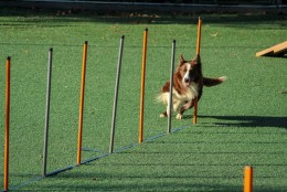 PÕHJALIK ÕPETUS: kõik, mida peaksid teadma koera treenimisest ja õpetamisest