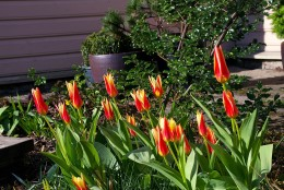 Tähelepanu, rohenäpp! Aeg mõelda järgmisele kevadele