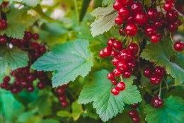 JUULIKUU AIAKALENDER: kasta hoolega, rohi jõudumööda ning naudi valmivaid vilju!