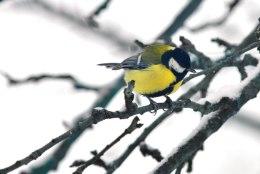Kata linnukestele toidulaud: valmista rikkalik seemnepärg või maiuspalarull!
