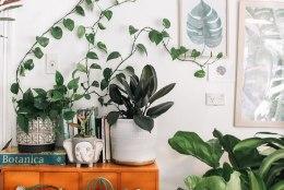 SKEEM | Tee kindlaks, kas su kodus võiks olla rohkem toataimi!