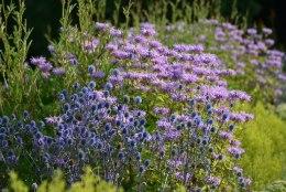 Silmailu ja meelerahu aastateks! Raja aeda vähest hooldust vajav peenar