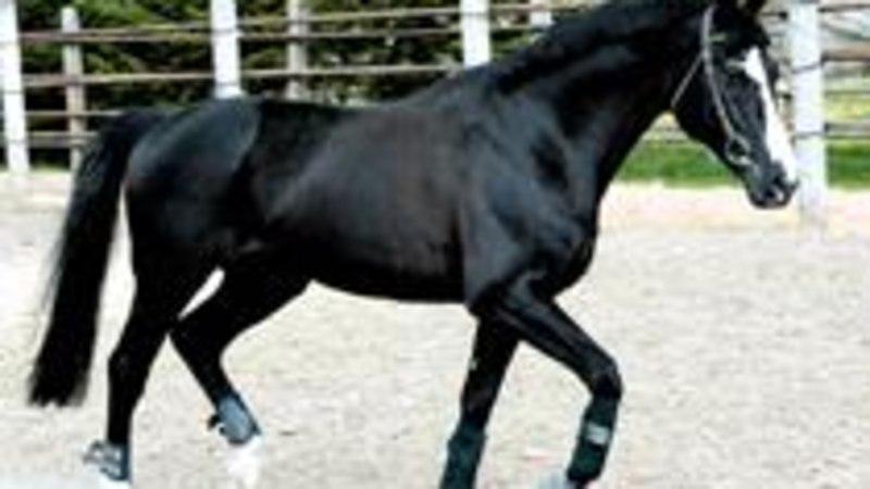 Hobune, kes andis nime  võistlussarjale
