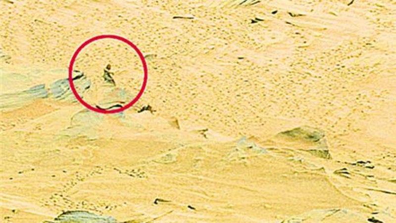 Marsikulgur pildistas väikest rohelist mehikest