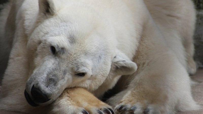 Tallinna loomaaias toimub jääkaru päev