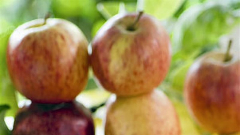 Kihiline õunakook