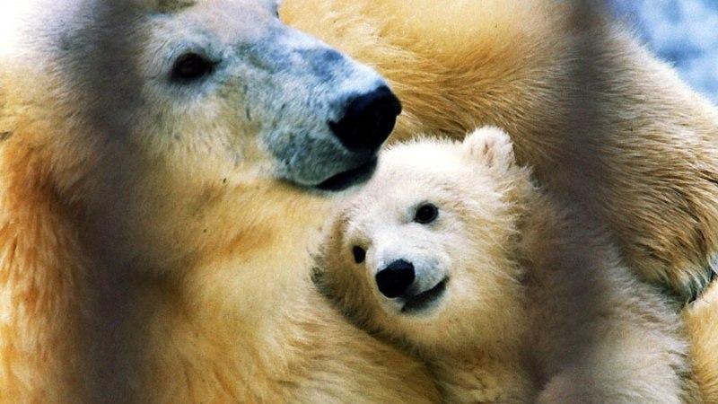 Jääkarumemm Vaida tuli uinutada igavesele unele