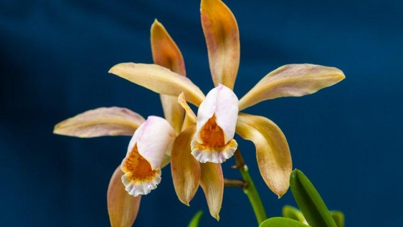 11 soovitust orhideekasvatajale
