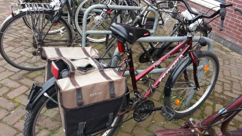 Tudengina Hollandis: Tavaline, et eakad ratturid täie hooga mööda vuravad