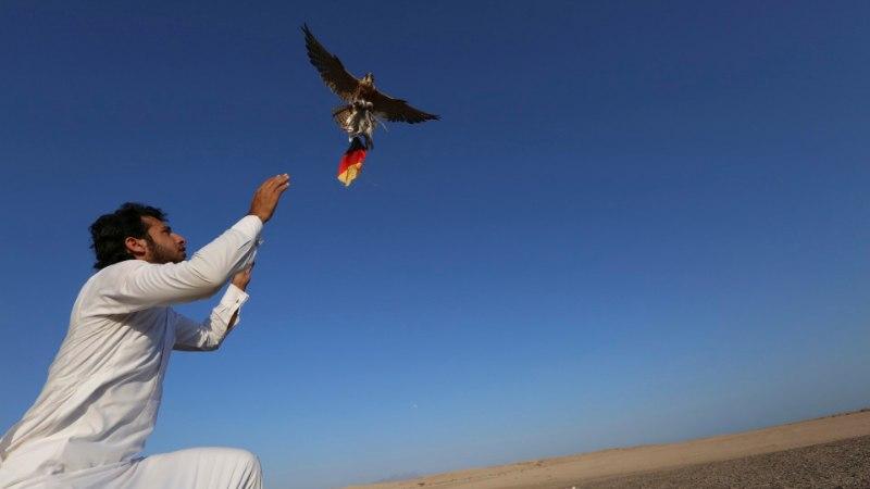 FOTOD: unustage ennustavad kaisuloomad! Kõrbes on oraakliks verejanuline pistrik!