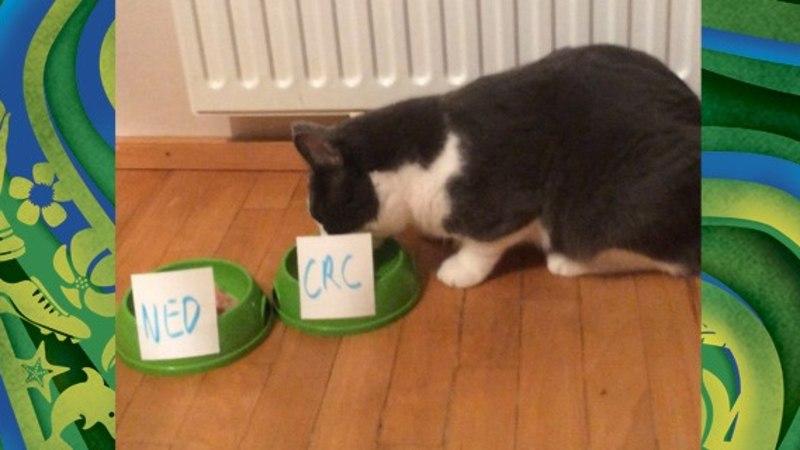 JALGPALLISTUUDIO: Ott Järvela kass ei karda teha riskantseid ennustusi