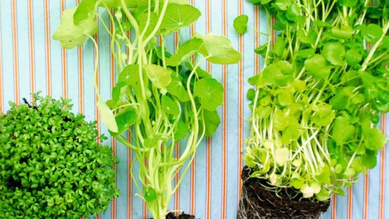 Rohelised kressilokid