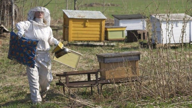 Mesinik: taimemürk tappis kõik minu mesilased!