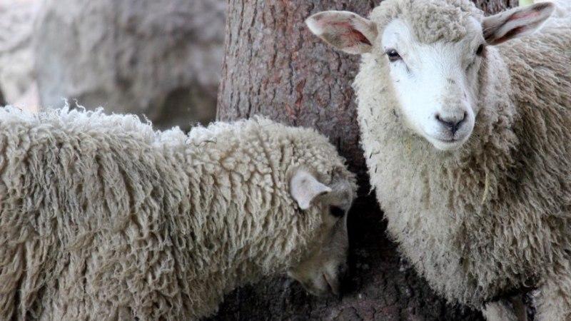 8 head nõuannet lambanaha puhastamiseks
