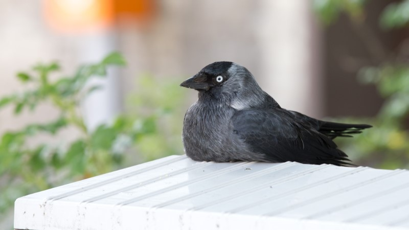 Harjumaal nähti imelikku lindu