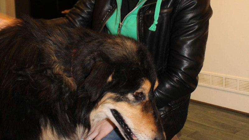 """Naine: """"Minuga juhtus ime! Ma leidsin üles oma viis aastat tagasi kadunud koera!"""""""