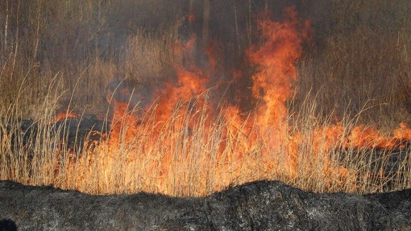 Lõkkest lendunud säde süütas Kosel elumaja, Maardus põles 16 hektarit kulu