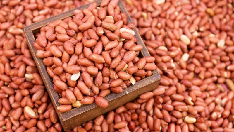 Maapähkliallergia riski vähendab varane kokkupuude maapähklitega