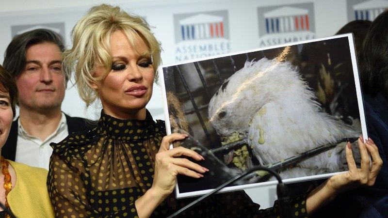 JÕHKRA NUUMAMISE VASTU: Pamela Anderson võitleb Prantsusmaal hanede ja partide eest