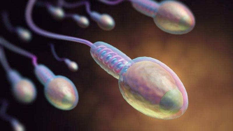 Uus avastus! Sperma joomine pikendab eluiga