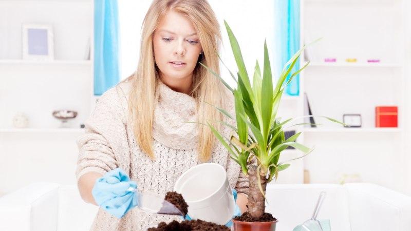 Kas sinu toataimed elavad talve üle? Loe mida teha!