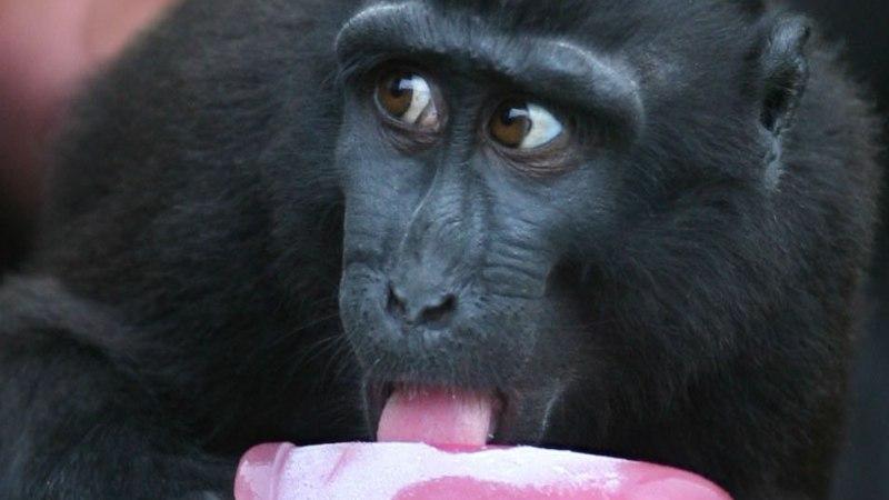 Kas toidutegemine tegi ahvist inimese?