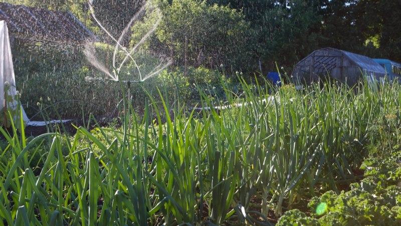 ILMAPROGNOOS: palavus jätkub, vihma tõenäosus väike