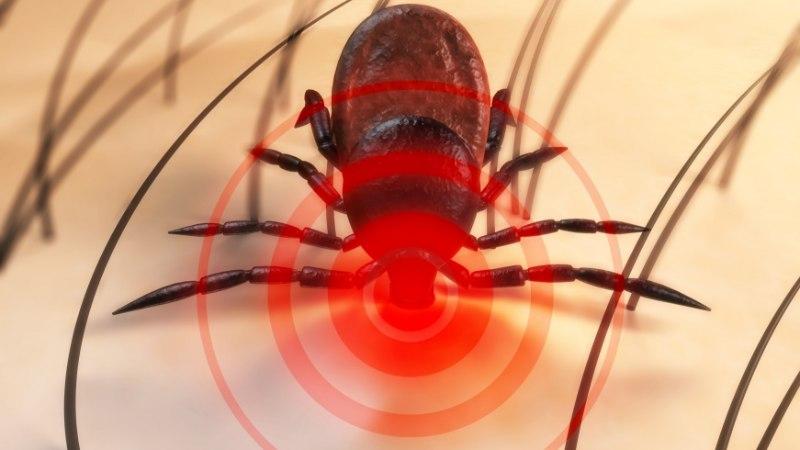 Ettevaatust! Salakaval ja ohtlik puugihaigus borrelioos