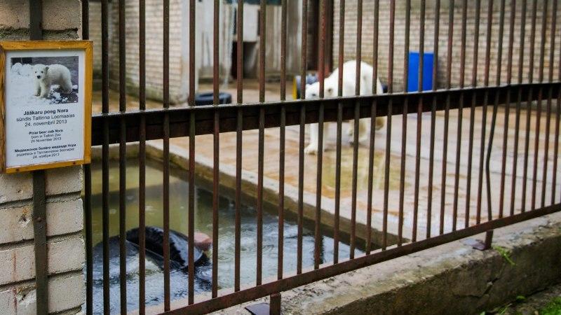 FOTOD | Kas tõesti on loomaaed jätnud jääkarud janu ja palavuse kätte vaevlema?!