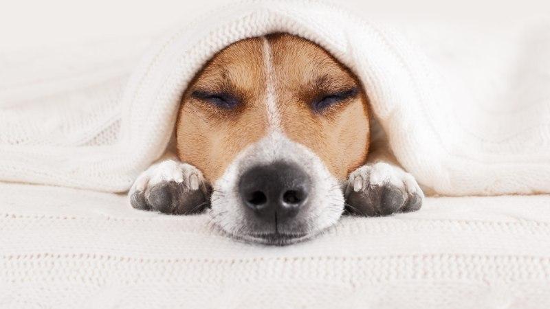Koera köha-nohu võivad olla märk tõsisest tervisehädast