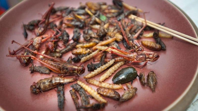 Maitse üle ei vaielda: üks pistab puulehti, teine toitub praetud sitikatest-satikatest või vitsutab kõvasti rasvast