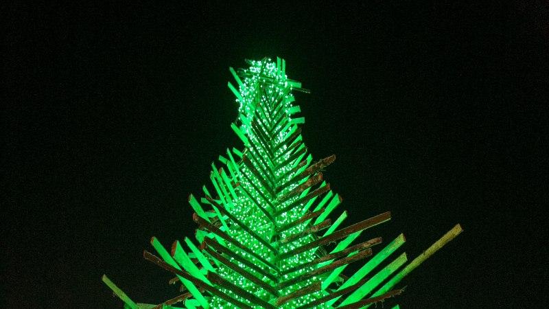 TANTS ÜMBER KUUSKEDE: Rakvere võib pühadeks püstitada kaks jõulupuud korraga