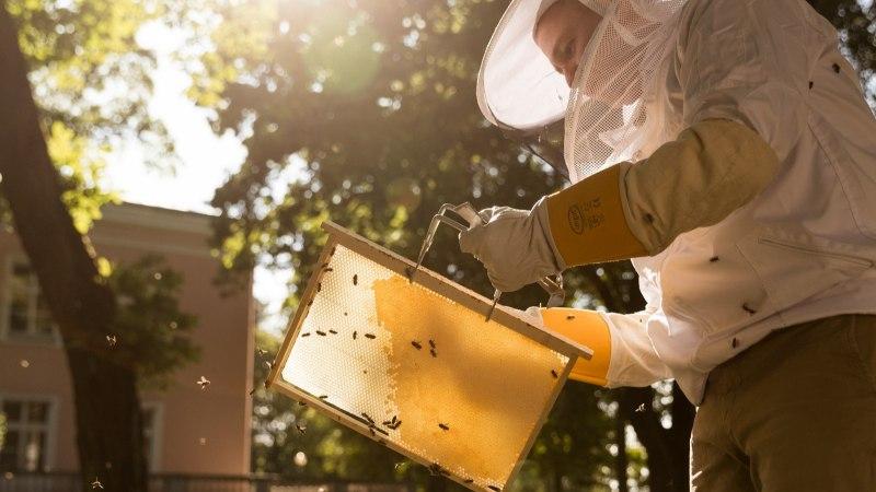 Mee-ekspert: Tallinna linna mesi kõlbab vägagi süüa