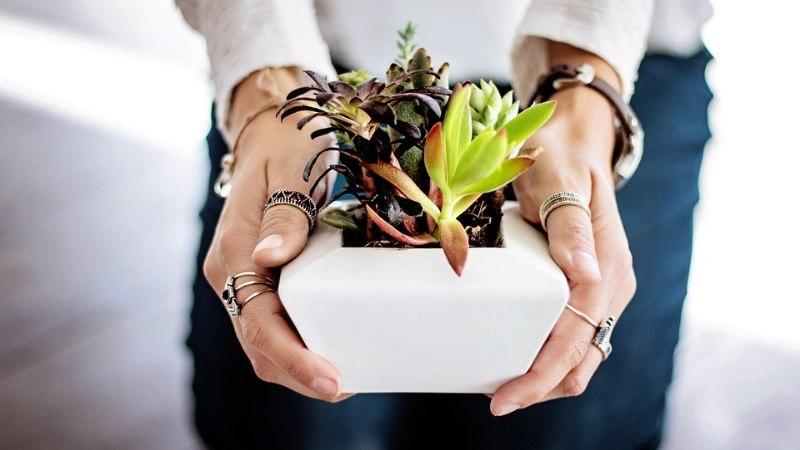 Ohoo! Need taimed teevad toaõhu puhtaks