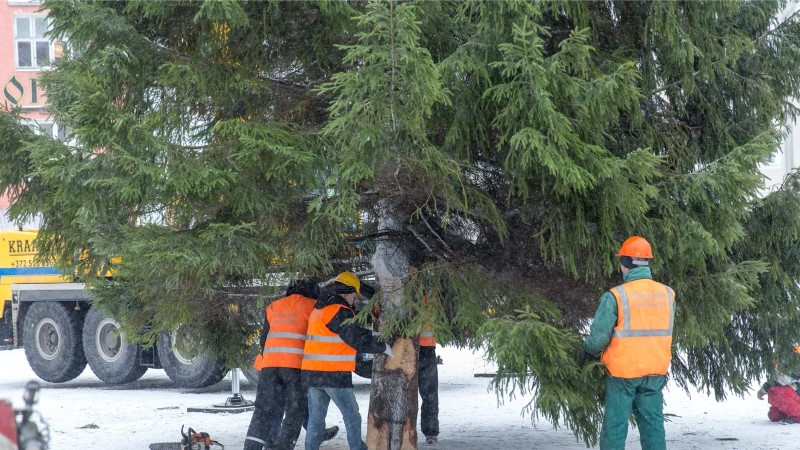 AITA LEIDA! Tallinn otsib jõulupuud