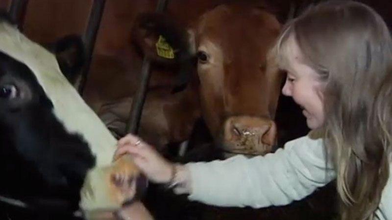TV3 VIDEO | Perenaine: juust on maitsev tänu õnnelikele lehmadele!