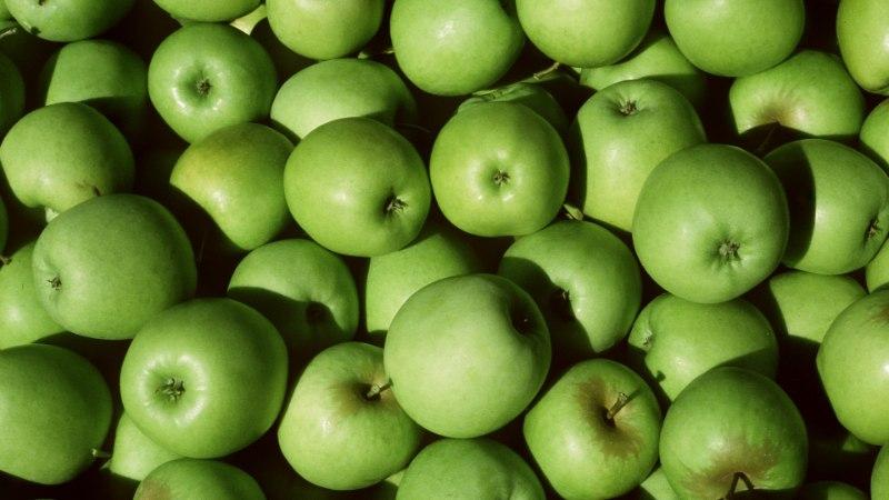 ENAM EI RIKNE: müüki jõuavad geenmuundatud õunad
