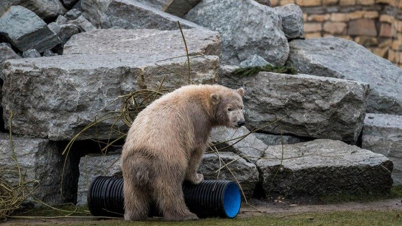 VIDEOINTERVJUU | Aleksei Turovski: inimestel on laste kasvatamisel jääkarudelt nii mõndagi õppida